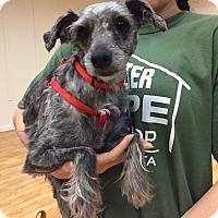 Adopt A Pet :: Jessy - Valencia, CA