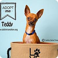 Adopt A Pet :: Teddy - Friendswood, TX