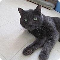 Adopt A Pet :: Bandit - Corinth, NY
