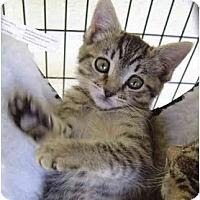 Adopt A Pet :: Biddy Biddy - Modesto, CA