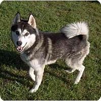 Adopt A Pet :: King - Belleville, MI