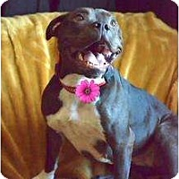 Adopt A Pet :: OLIVE! - Grafton, OH