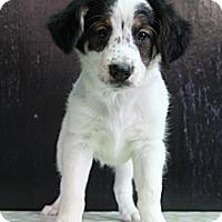 Adopt A Pet :: Coral - Bedminster, NJ