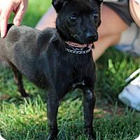 Adopt A Pet :: Chikia - Tinton Falls, NJ