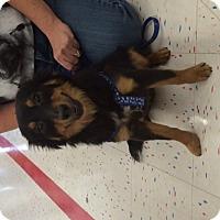 Adopt A Pet :: Joey - Corona, CA