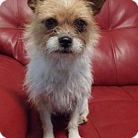 Adopt A Pet :: Izzy - Norcross, GA