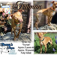Terrier (Unknown Type, Medium) Mix Dog for adoption in Boyd, Texas - Truman