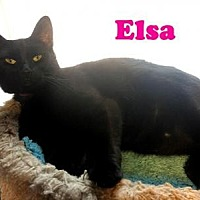 Domestic Shorthair Cat for adoption in East Stroudsburg, Pennsylvania - Elsa