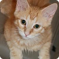 Adopt A Pet :: Max - O'Fallon, MO