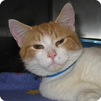 Adopt A Pet :: 17949 - Hobart, IN