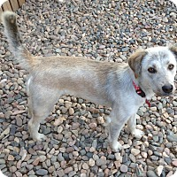 Adopt A Pet :: Charm - Phoenix, AZ