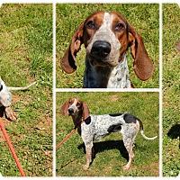 Adopt A Pet :: Patty - Bardonia, NY