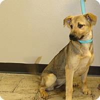 Adopt A Pet :: Gretel - Oviedo, FL