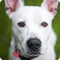 Adopt A Pet :: Julian - Santa Monica, CA