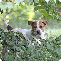 Adopt A Pet :: Roger Boy~ meet me! - Glastonbury, CT