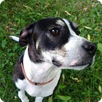 Adopt A Pet :: Dorcy - Kendall, NY
