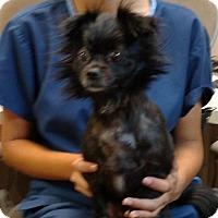 Adopt A Pet :: Emmie - Oviedo, FL
