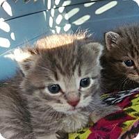 Adopt A Pet :: Tom - Brainardsville, NY