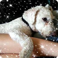 Adopt A Pet :: Pending!!Lucky - OH - Tulsa, OK