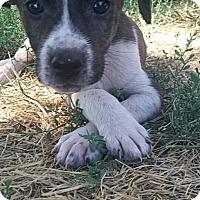 Adopt A Pet :: Chevy - Ogden, UT