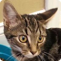 Adopt A Pet :: Jake - Lexington, KY
