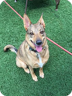 German Shepherd Dog Mix Dog for adoption in Scottsdale, Arizona - Libby
