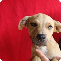 Adopt A Pet :: Riley - Oviedo, FL