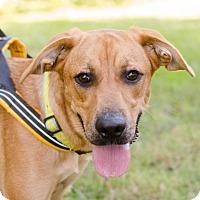 Adopt A Pet :: Nora - Greenwood, SC