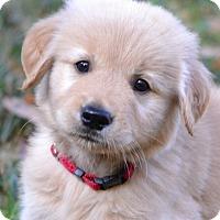 Adopt A Pet :: Jake - Enfield, CT