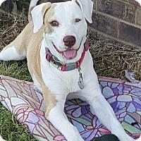 Adopt A Pet :: Nadine~new video! - Glastonbury, CT