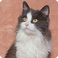 Adopt A Pet :: Jeremy - Elmwood Park, NJ