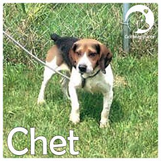 Western Pa Dog Adoption