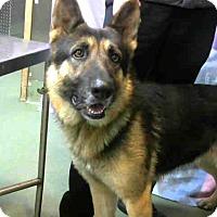 Adopt A Pet :: URGENT on 1/23 @DEVORE - San Bernardino, CA