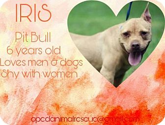 American Staffordshire Terrier/Pit Bull Terrier Mix Dog for adoption in Christiana, Tennessee - Iris *Sweetheart Special*
