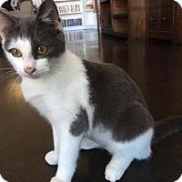 Adopt A Pet :: Perky - Bulverde, TX
