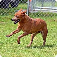 Adopt A Pet :: Lady Bug - El Campo, TX