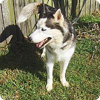 Adopt A Pet :: Max II - Orange Park, FL
