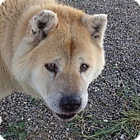Adopt A Pet :: Ozzie - Hayward, CA