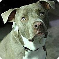 Adopt A Pet :: Watson - Gilbert, AZ