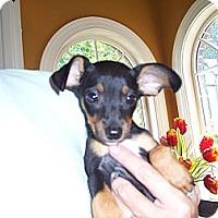 Adopt A Pet :: Minnie - Lexington, TN