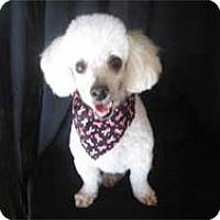 Adopt A Pet :: ALEC - Melbourne, FL