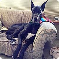 Adopt A Pet :: Tony - Broomfield, CO