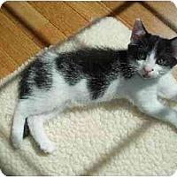 Adopt A Pet :: Panda - Westfield, MA