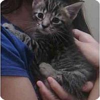 Adopt A Pet :: Jake - Reston, VA
