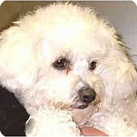 Adopt A Pet :: Carlee - La Costa, CA