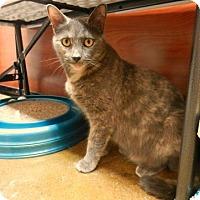 Adopt A Pet :: Sasha - meriden, CT