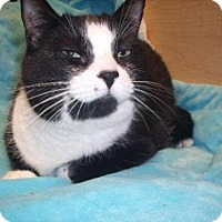 Adopt A Pet :: Oreo - Burlington, ON