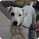 Adopt A Pet :: Betsy *foster needed*