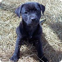 Adopt A Pet :: Pebbles - Waller, TX