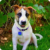 Adopt A Pet :: Penny - Salt Lake City, UT